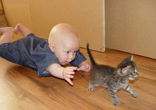 Baby Chasing a cat